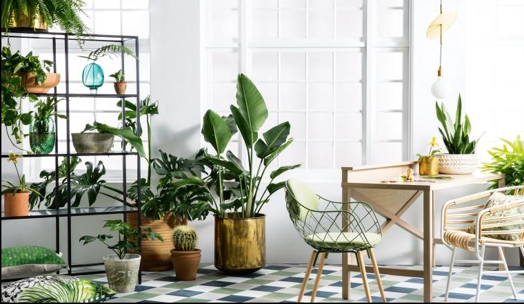 10 indoor plants that are so easy to take care of archetypes for Easy to take care of plants